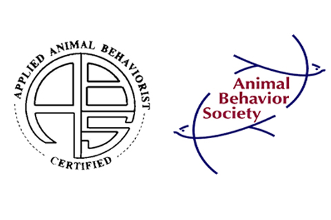 Certified Applied Animal Behavior Animal Behavior Society